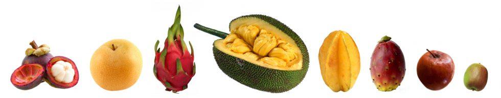 De kosjere hamvraag|Nieuwe vrucht