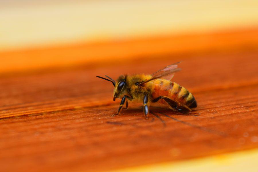 Israël kampt met honingtekort